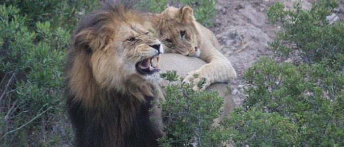 Wildlife sudafrica
